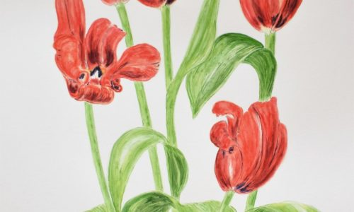 Red Tulips-Floral Watercolour Painting