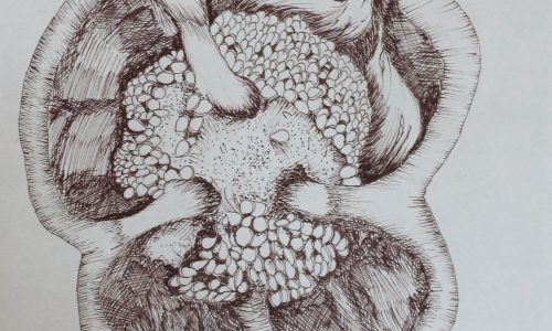 Pepper Seeds- Ink Still Life Drawing Archives - Art 4 You